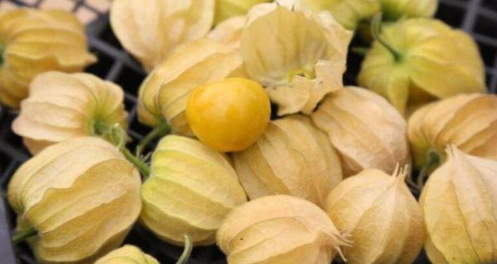 Altın çileğin kilosu 150 liradan satılıyor: Dünyanın en zengin lif oranına sahip meyvesi
